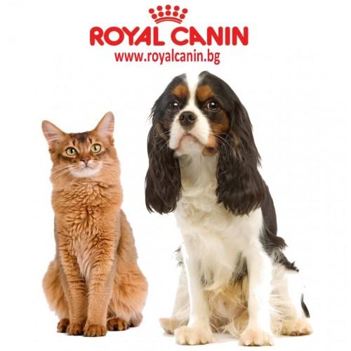 kupit-royal-canin-v-vitebske-170117081315-36748500royal-canin-500x500